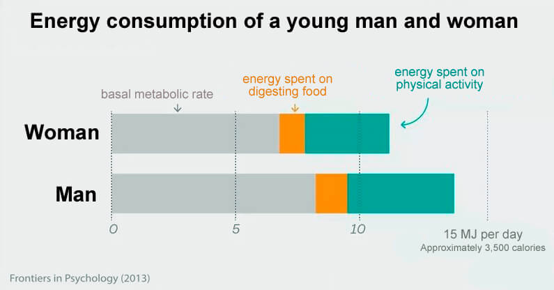 energy consumption metabolism